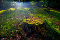 Just a Stump by Keld Bach
