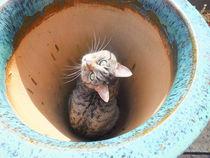 Potted Cat von Rebekah Tyler-Harris