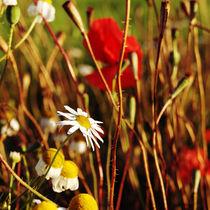 red summer II by Karolina Czochanska