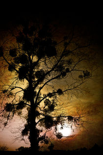 The Sunset Tree by loriental-photography