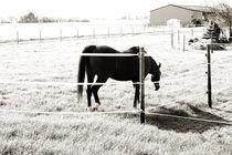 Pferd auf der Weide von Bastian  Kienitz