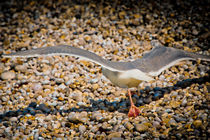 The Takeoff by loriental-photography