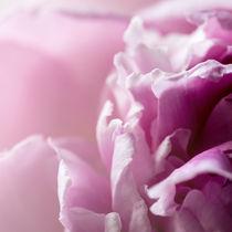 Blütentraum in rosa by Ursula Fleiß