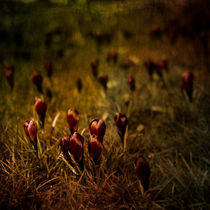 Fields of Elegance by loriental-photography