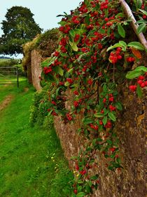 Little Red Berries. by Heather Goodwin