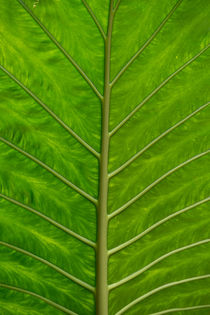 Jungle Leaf von Russell Bevan Photography
