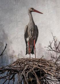 Stork by Joakim Eklund
