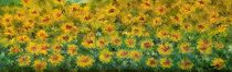 Flowers by loredana messina