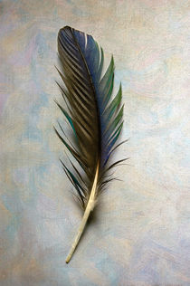 Bifr-0022-texturebkg-macaw-feather