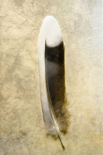 Mourning Dove tail feather von Barbara Magnuson & Larry Kimball