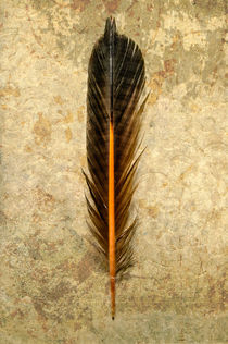 Flicker Feather von Barbara Magnuson & Larry Kimball