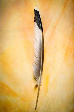 Bifr-0047-texturebkg-dove-feather