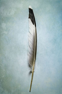 Bifr-0047-texturebkg-2-dove-feather