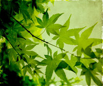Leaf and Sky von Linde Townsend