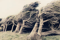 Wind Sculptures by Linde Townsend