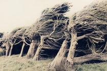 Wind Sculptures von Linde Townsend