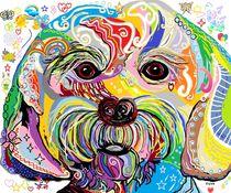 Maltese Puppy von eloiseart