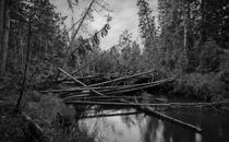 Deadfall trees. von evgeny bashta