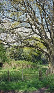 Rural Norfolk. by rosanna zavanaiu