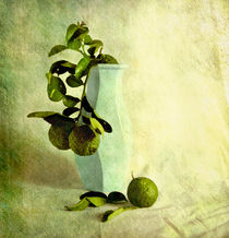 Lime Light by Linde Townsend