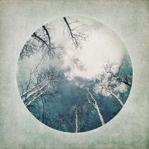 'round treetops II' von Priska  Wettstein