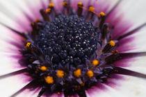 Blume von Detlef Koethner