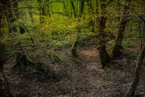 Sleepy Hollow by David Tinsley