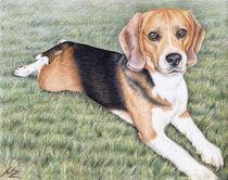 Beagle im Gras von Nicole Zeug