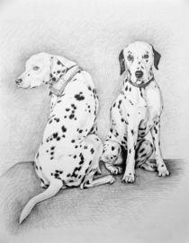 Dalmatiner von Nicole Zeug