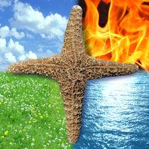 Stern der vier Elemente | Star of 4 Elements Squared | Estrella de los cuatro elementos von artistdesign