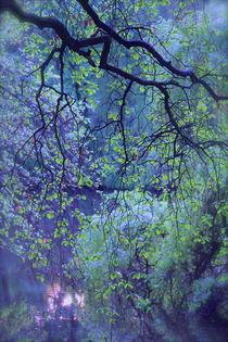 IM PARK von © Ivonne Wentzler