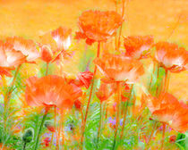 Poppy by Linde Townsend