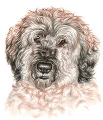 Portrait Hund Wuschel von Nicole Zeug