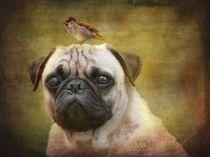 Friends like Pug and Bird by barbara orenya