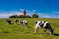 Kühe und Leuchtturm von Rico Ködder