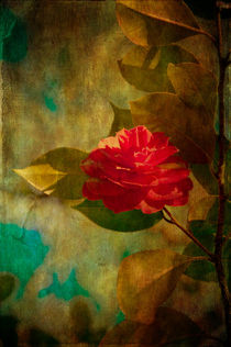 'The Lady of the Camellias' von loriental-photography