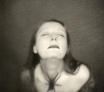 Im Netz der Spinne von Katharina Kabara