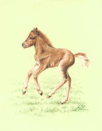 Red Pony Fohlen von Nicole Zeug