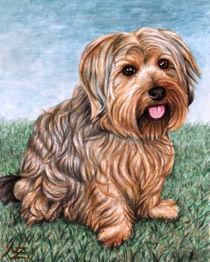 Jorkshire Terrier von Nicole Zeug