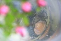 Muscheltraum von Silke Bicker