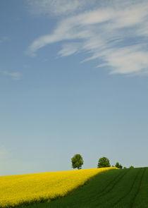 Sommerhimmel über den Feldern von Brigitte Deus-Neumann