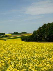 Gelbe Pracht - Das leuchtende Gelb der Rapsfelder prägt im Mai die Landschaft by Brigitte Deus-Neumann