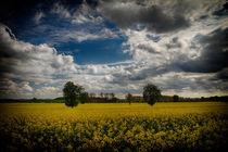 Norfolk rape field von royspics