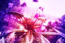 flower von drunken-tears