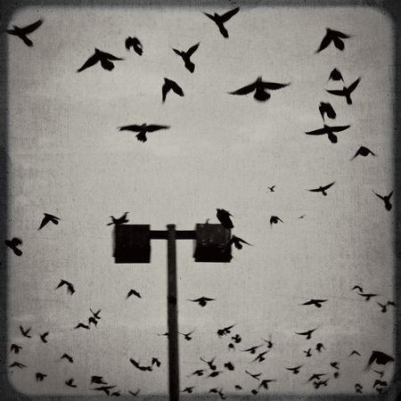 Revenge-of-the-birds