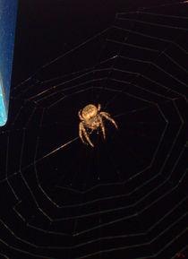Spinne bei Nacht von jefroh