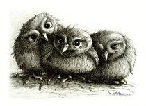 Drei Eulen - Three Owls von Stefan Kahlhammer