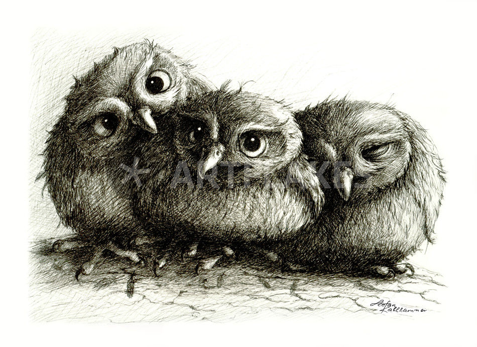 baby owls drawings