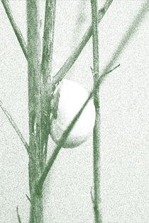 Schalen gezeichnet von Bastian  Kienitz