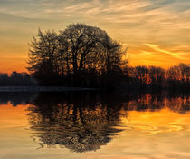 Tree Reflections von David Pringle